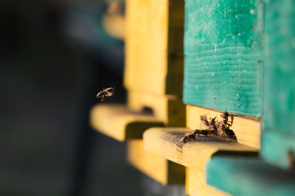 beekeeping croatia