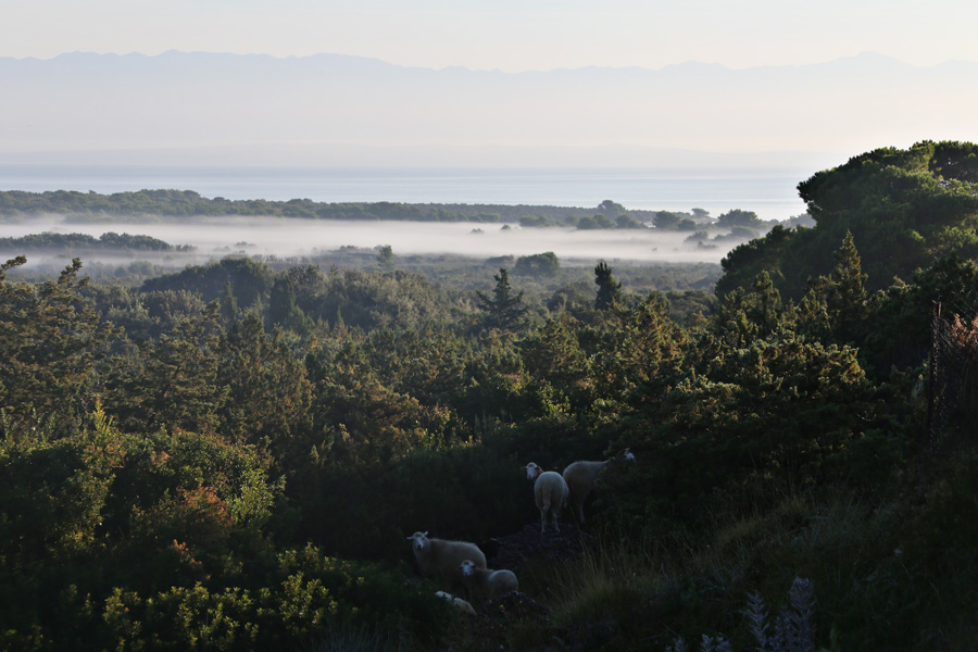fields_on_island_molat