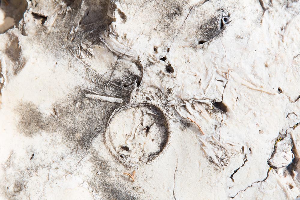 fossiles_on_molat