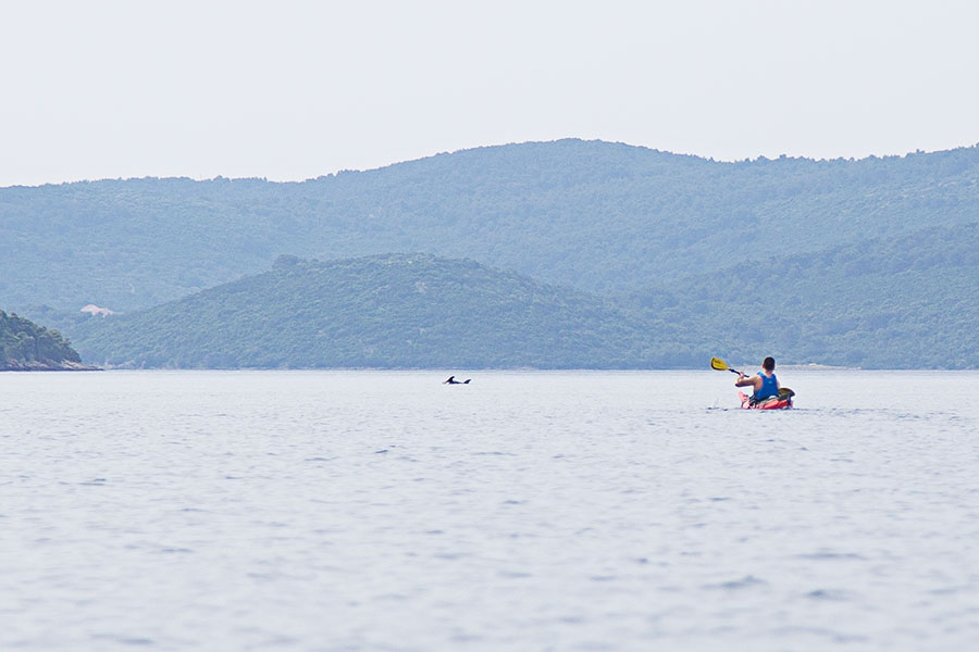 kayak with dolphins in croatia