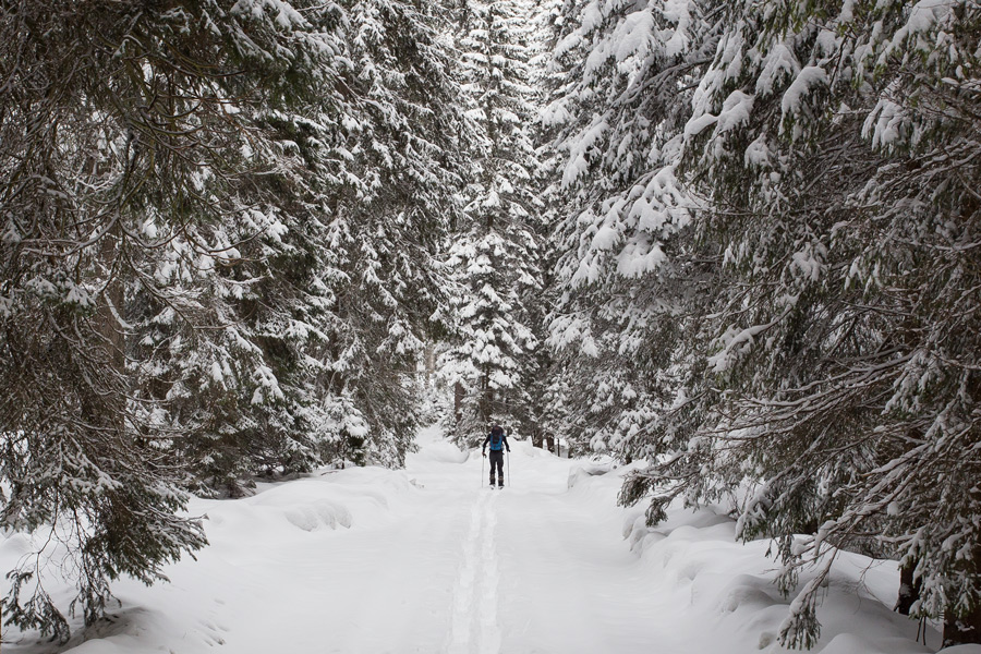 skitouring_forest