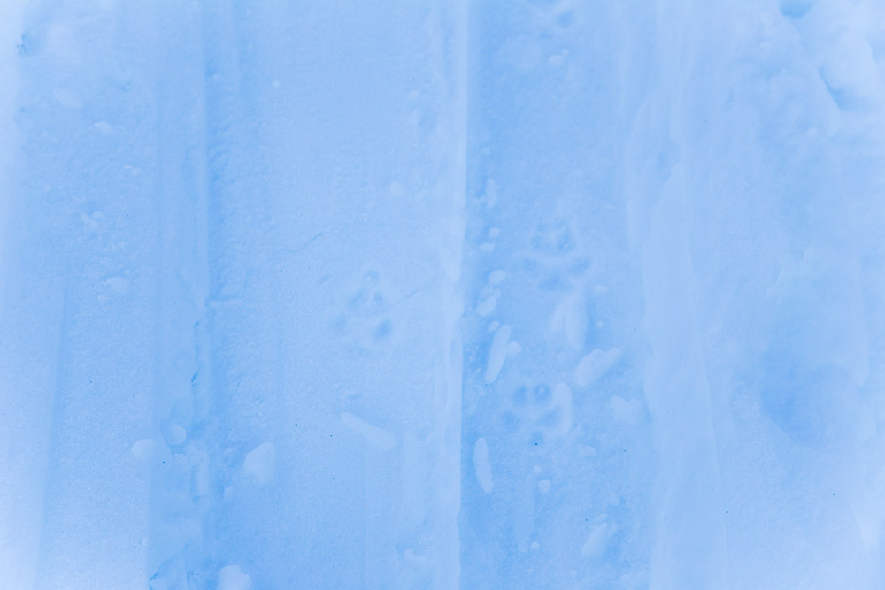 rabbit tracks on ski touring adventure holiday