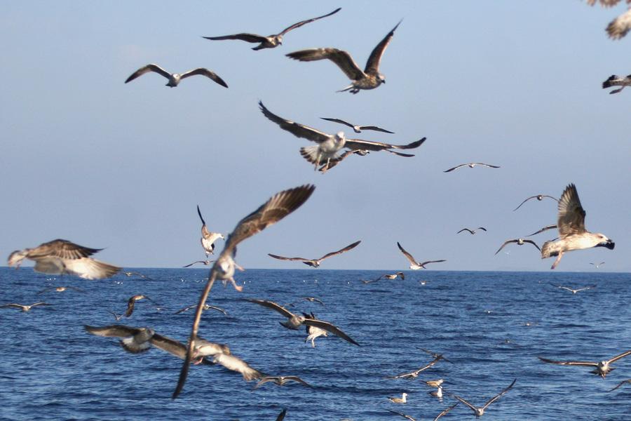 sea gulls croatia