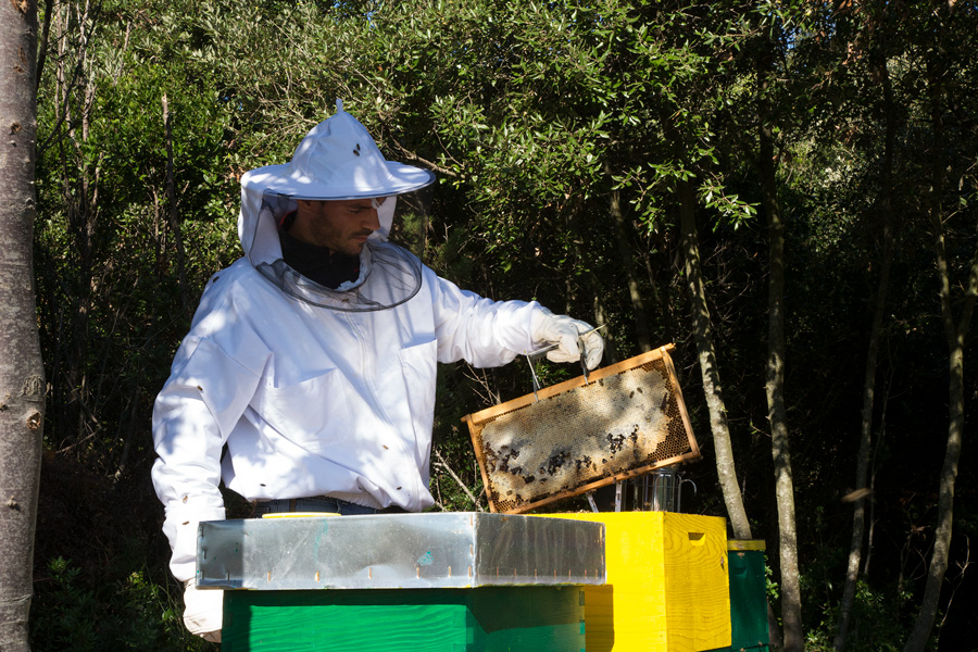 beekeeping_on_island_molat
