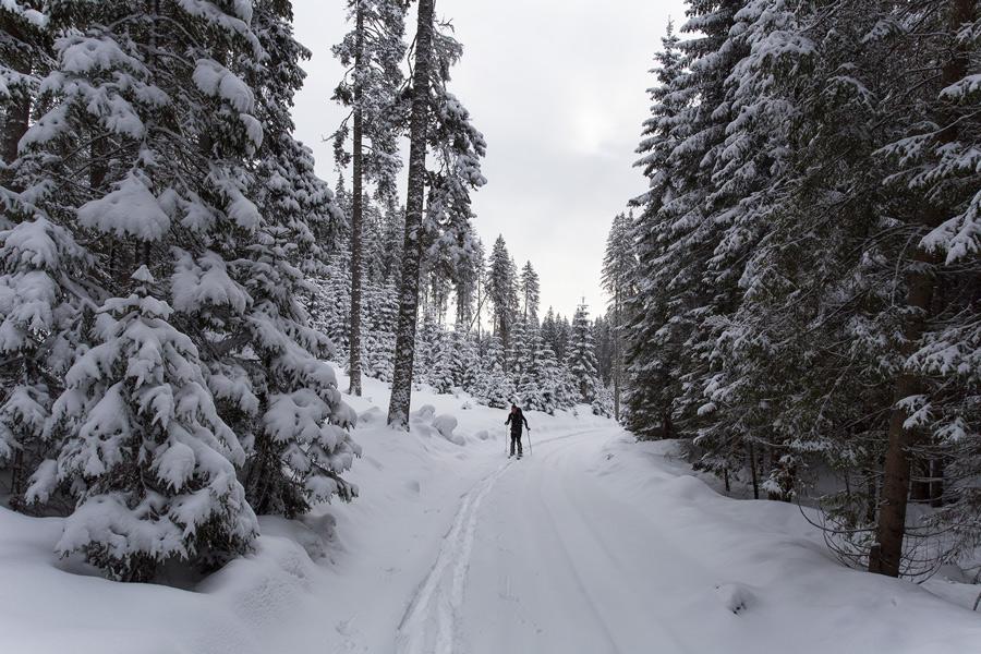 powder snow forest