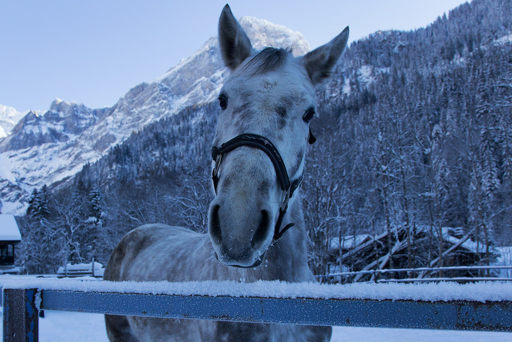 horse on ski touring adventure trip