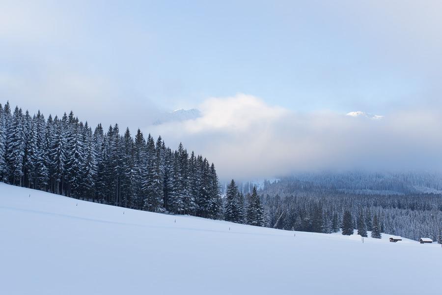 slovenian_forest